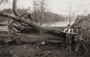 Roland Wyss, der von 1941 bis 1979 Wirt auf der Wartstein war, hat einen Lederbirnbaum gefällt. DAmals war das Baumfällten noch ein Grossereignis!