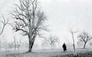 Der Lederbirnnbaum nördlich der Wartstein.